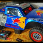 Red Bull reed Losi 295